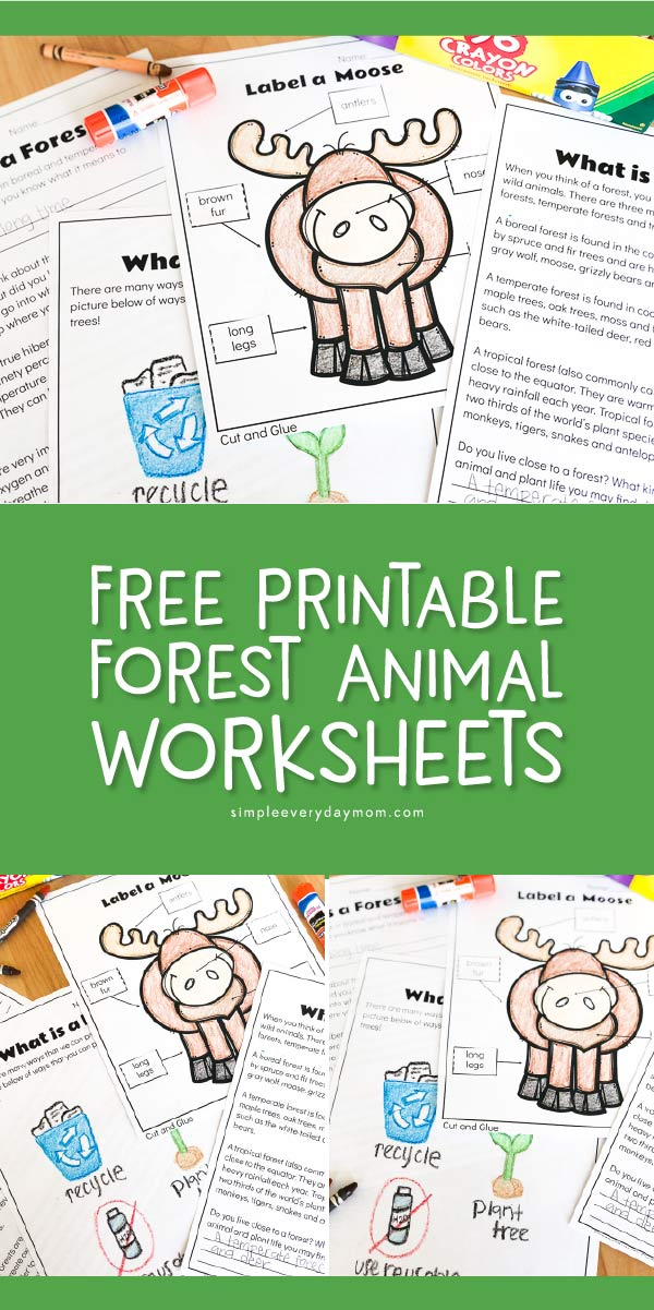 free forest animal worksheets for kindergarten