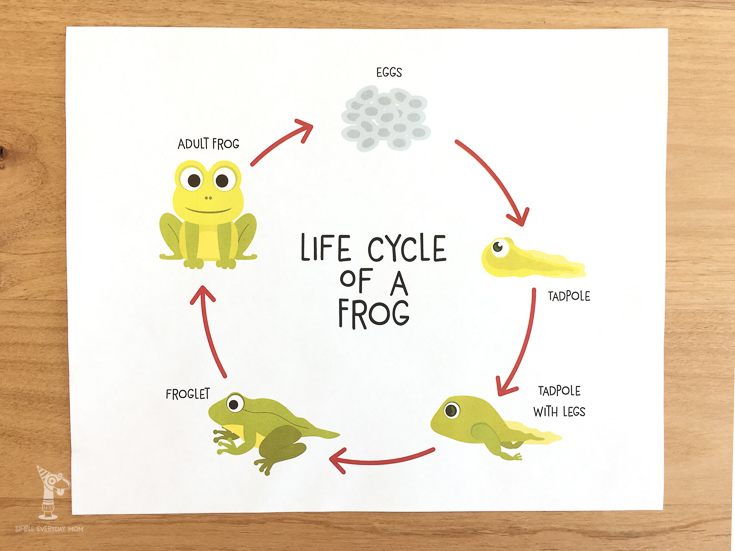 Teach kids the life cycle of a frog