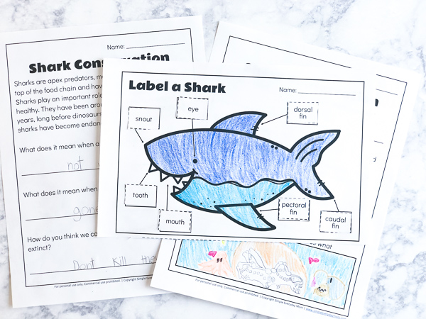 Free Shark Printables For Kids | Teach kids about the parts of a shark plus talk about conservation with these fun printables. #teaching #kindergartenworksheets #earlychildhood #kidsandparenting