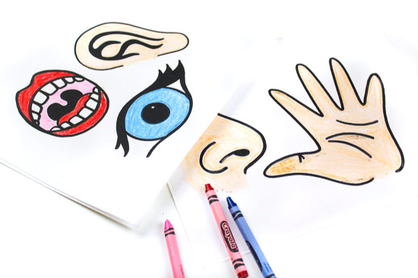 graphic regarding 5 Senses Printable called Obtain People Totally free Printable 5 Senses For Little ones Puppets In direction of