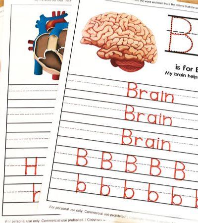 human body kids worksheets