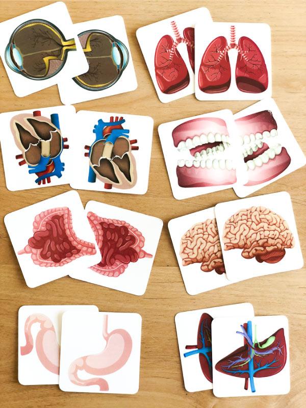 human body activities for preschool | teach organs with this memory game #learningactivities #kidsactivities #preschool