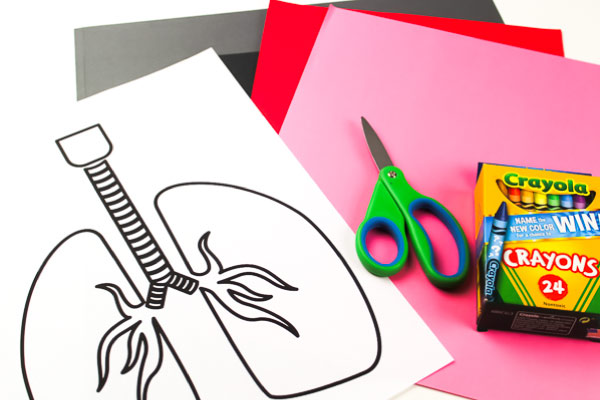 Human Body Activities For Kids: Lung Craft