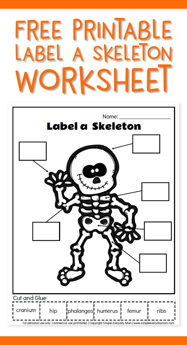 Skeleton Worksheets For Kids | Use this free printable worksheet to teach kids some basic human anatomy. It's a great learning activity that's fun too! #educationalactivities #learningactivities #kindergarten #earlychildhood #elementary #kidsactivities #worksheetsforkids
