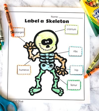 skeletal system worksheets for kids #kids #kindergartenworksheets #teachers #educationalactivities