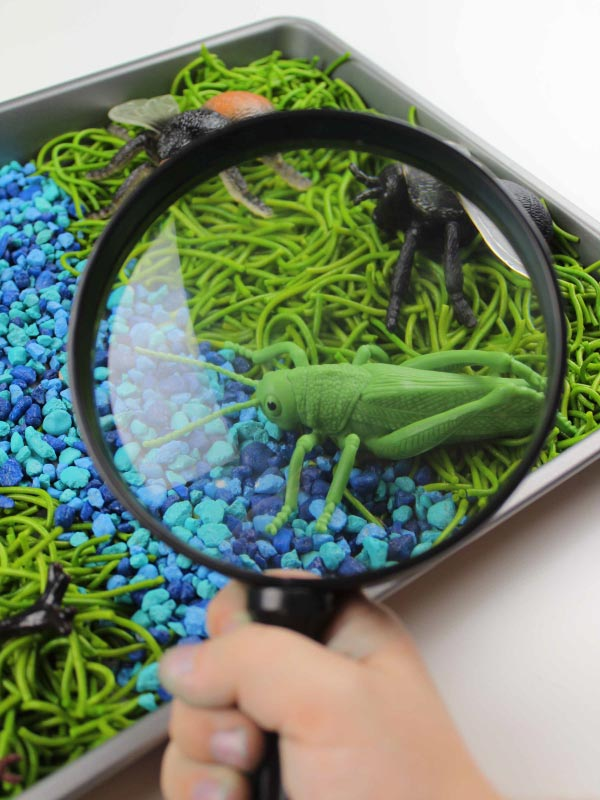 closeup of magnifying glass and grasshopper in bug sensory bin