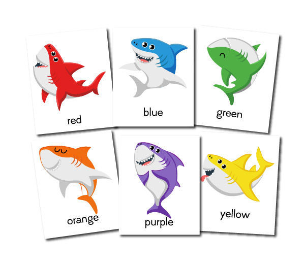 shark color flashcards