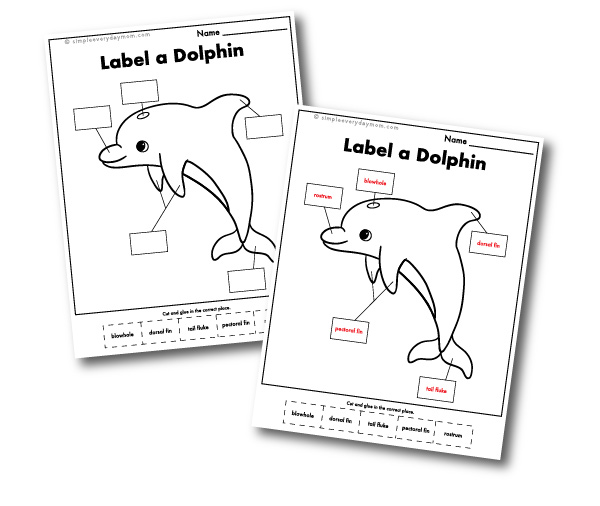 label a dolphin worksheet with key