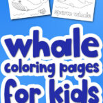 whale coloring page mockup with the words whale coloring pages for kids in the middle
