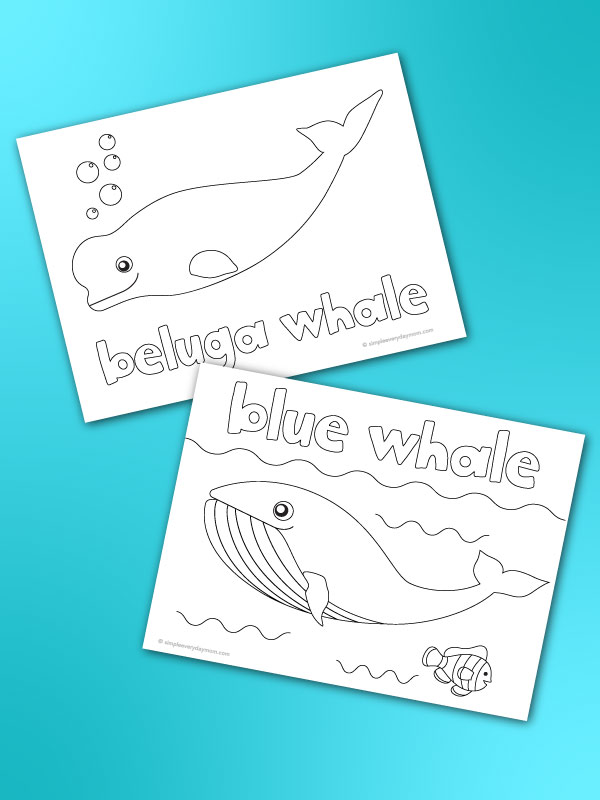 whale coloring page mockup