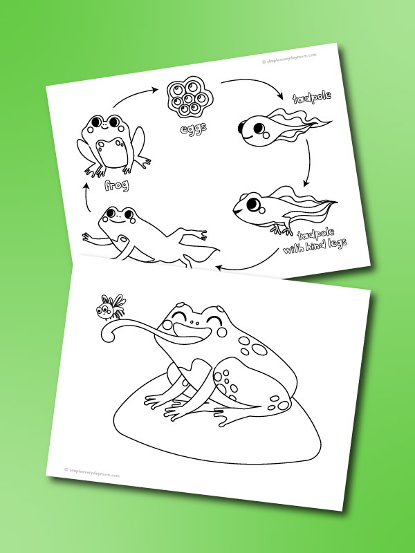 frog coloring pages mockup